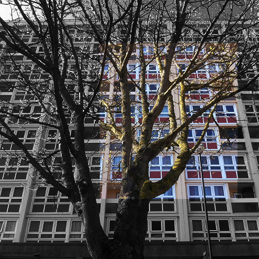 Trees Before Buildings 7